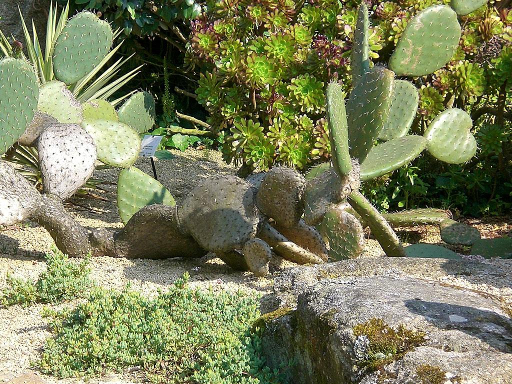 Jardin exotique de roscoff 29 682 roscoff jardin - Le jardin exotique de roscoff ...