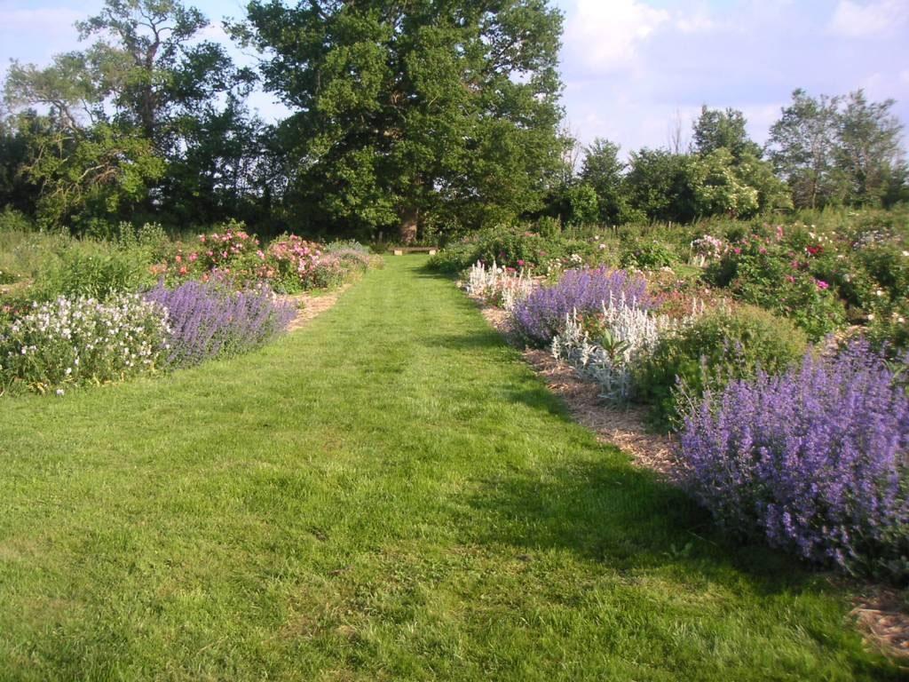 Jardin Mosaïque - 72430 - Asnières sur Vègre - jardin