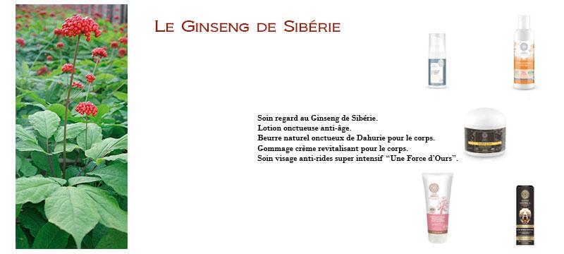 LE GINSENG DE SIBÉRIE